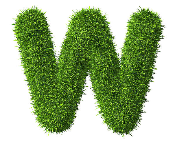 Letter W of grass Isolated on the white background letter w stock pictures, royalty-free photos & images