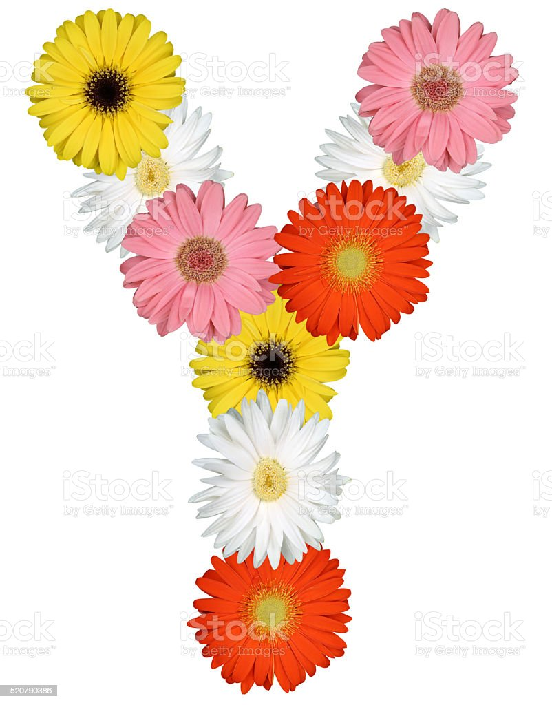 Letter Y alphabet from flowers isolated on white stock photo