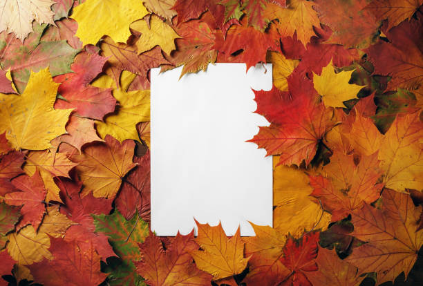 Letterhead, autumn foliage Blank white letterhead on a background of bright autumn foliage. Flat lay. autumn leaf color stock pictures, royalty-free photos & images