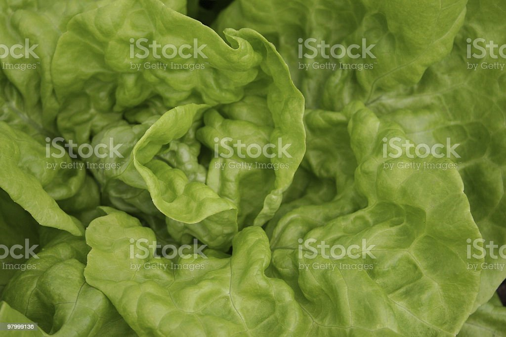 Lettuce close up bright clear crisp royalty free stockfoto