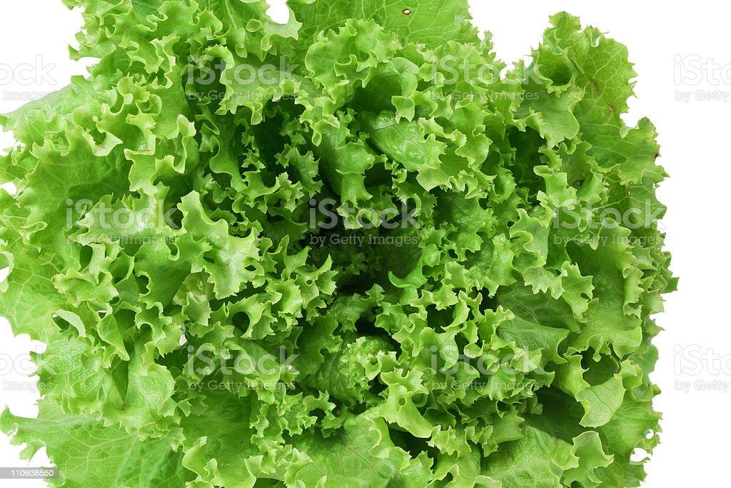 lettuce closeup stock photo