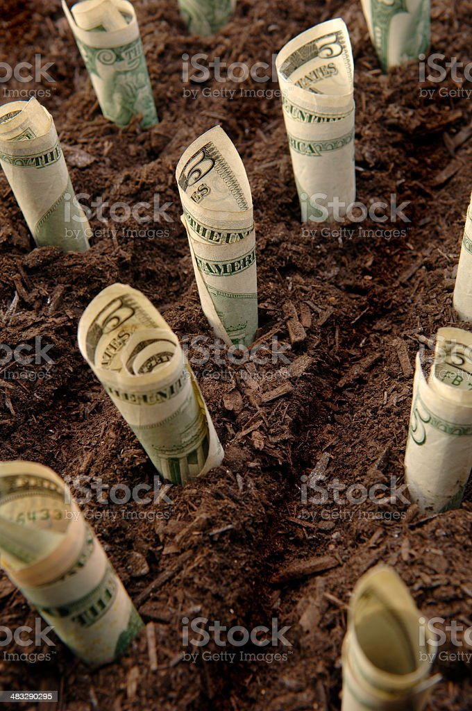 'Lettuce' Field stock photo