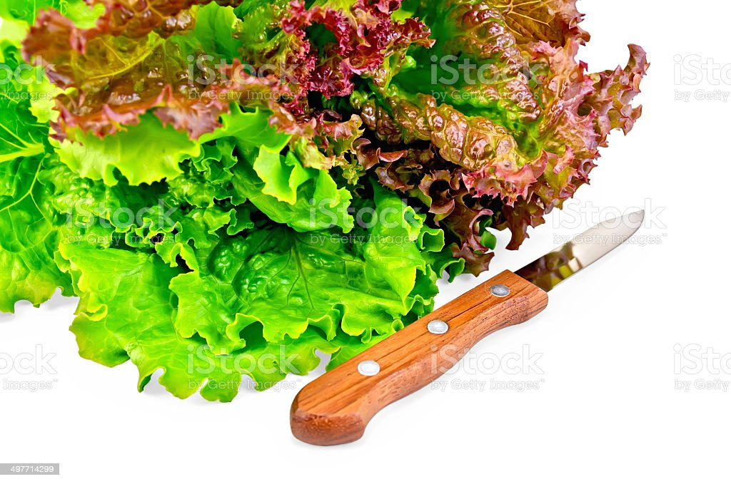 Lettuce green and red with a knife royalty-free stock photo