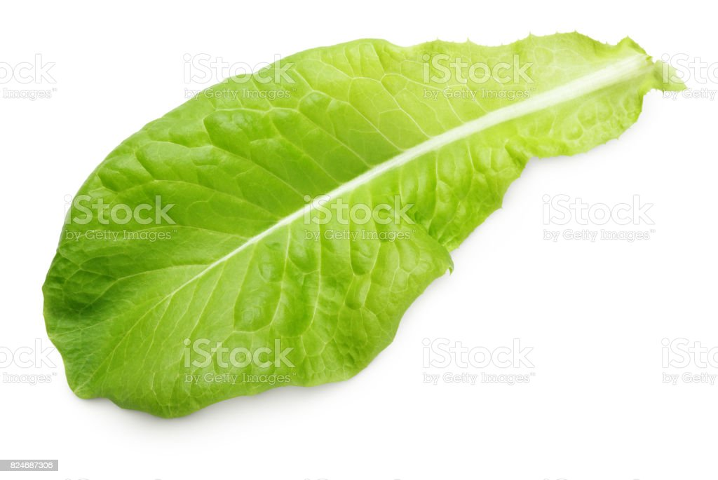 lettuce green leaf salad isolated on white stock photo