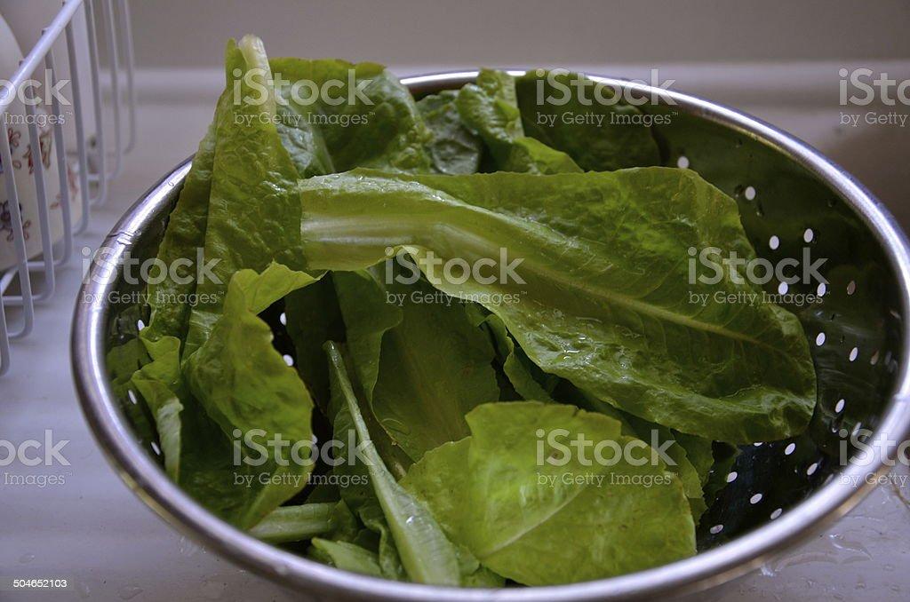 lettuce in a strainer stock photo