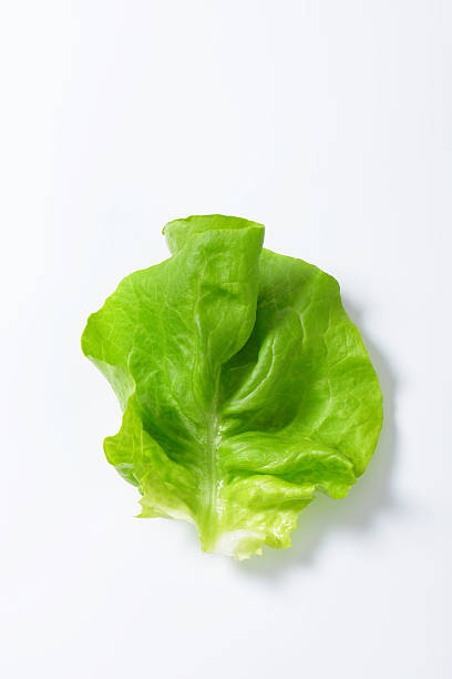 lettuce leaf butterhead lettuce leaf isolated on white background butterhead lettuce stock pictures, royalty-free photos & images