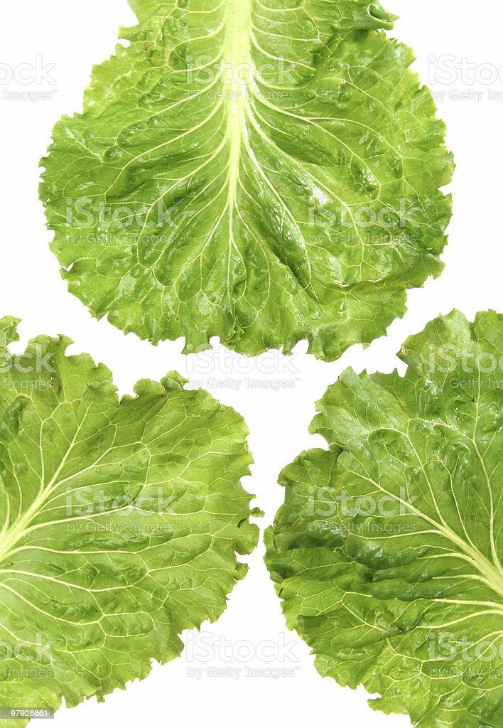 lettuce leaf royalty-free stock photo