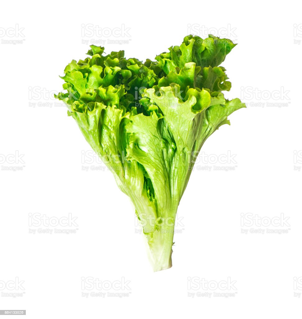 Lettuce leaves isolated royalty-free stock photo
