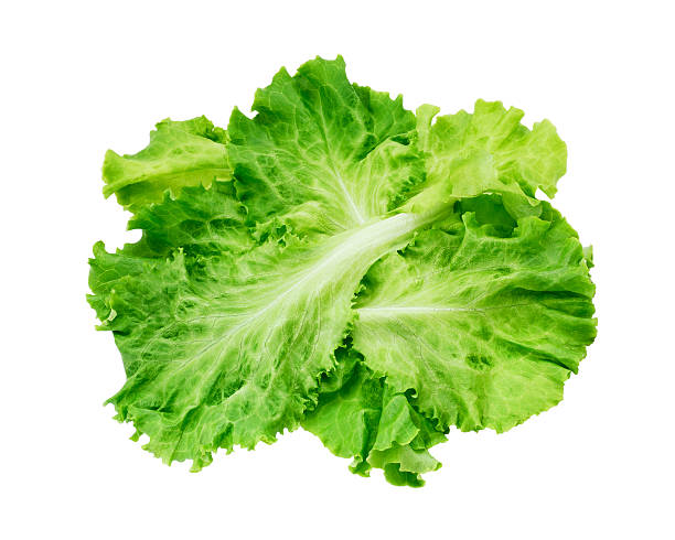 lettuce - lettuce stock photos and pictures