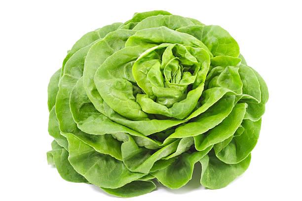 lettuce - 生菜 個照片及圖片檔