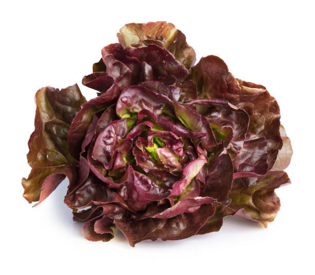 Kopfsalat rot, Salat rougette – Foto