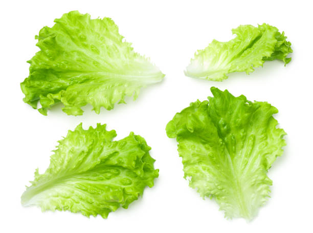 lettuce salad leaves isolated on white background - lettuce stock photos and pictures