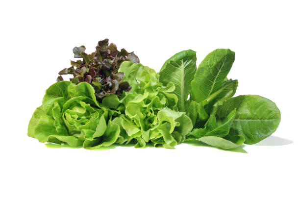 lettuce salad on white background. - lettuce stock pictures, royalty-free photos & images