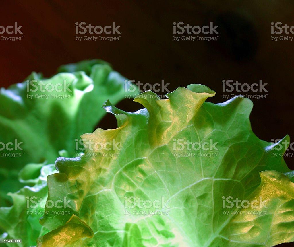 Lettuce salad royalty-free stock photo
