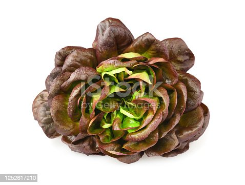 Lettuce variety 'oak leaf', whole with water droplets. Fresh red lettuce isolated on white background
