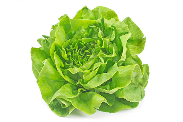 lettuce vegetable isolated on white background - lettuce stock photos and pictures