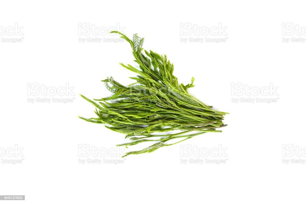 Leucaena raw  isolated on white background stock photo