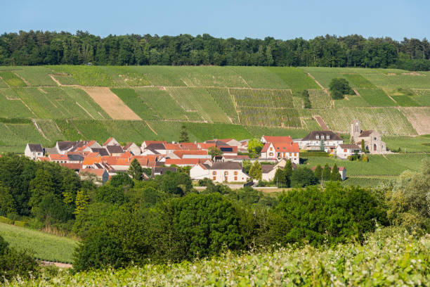 Leuvrigny Vineyards Champagne The small village of Leuvrigny in Champagne near Epernay with vineyards, France. marne stock pictures, royalty-free photos & images