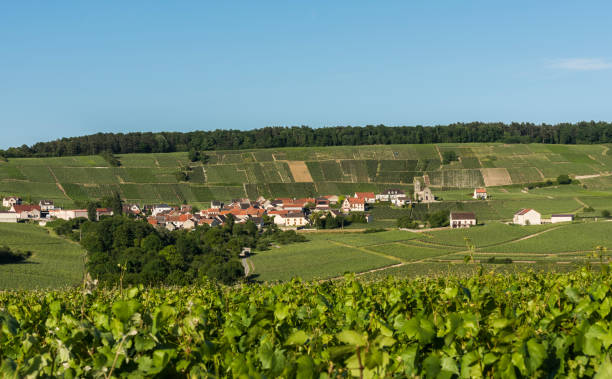 Leuvrigny Vineyards Vallee de la Marne The small village of Leuvrigny in Champagne near Epernay with vineyards, France. marne stock pictures, royalty-free photos & images