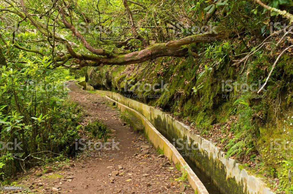 Levada da Portela, Madeira, Portugal stock photo