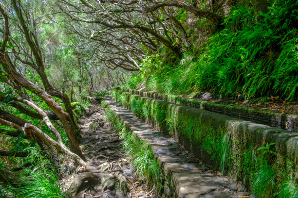 Levada das 25 Fontes and Levada do Risco walkways with luscious flowers on Madeira island during a beautiful summer day stock photo