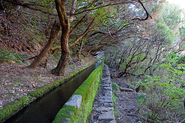 Levada in Madeira stock photo