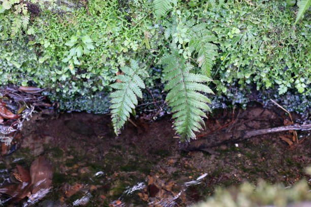 Levada Water and Green Plants Growing Next to the Levada in Madeira stock photo