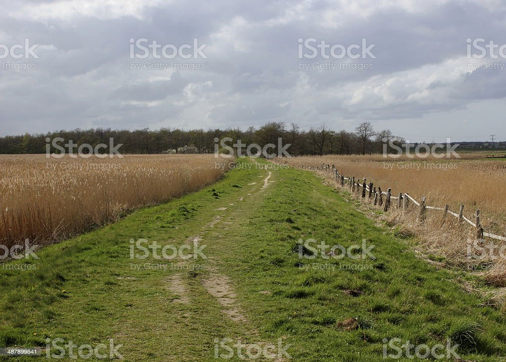 Levee With Reed stock photo