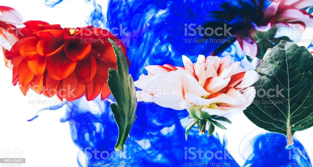 Levitating beautiful flowers under water. stock photo