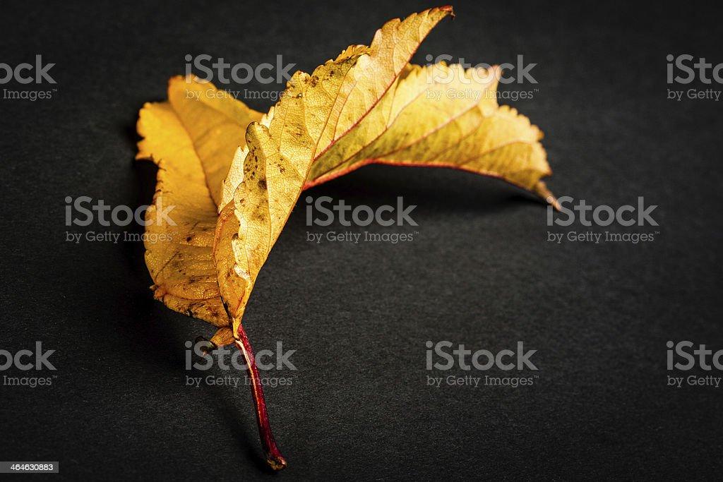 liść stock photo
