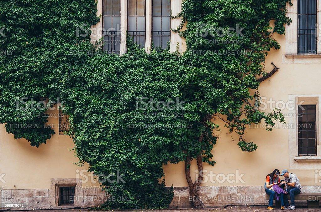 Liana in arcade courtyard of the Royal Wawel Castle stock photo