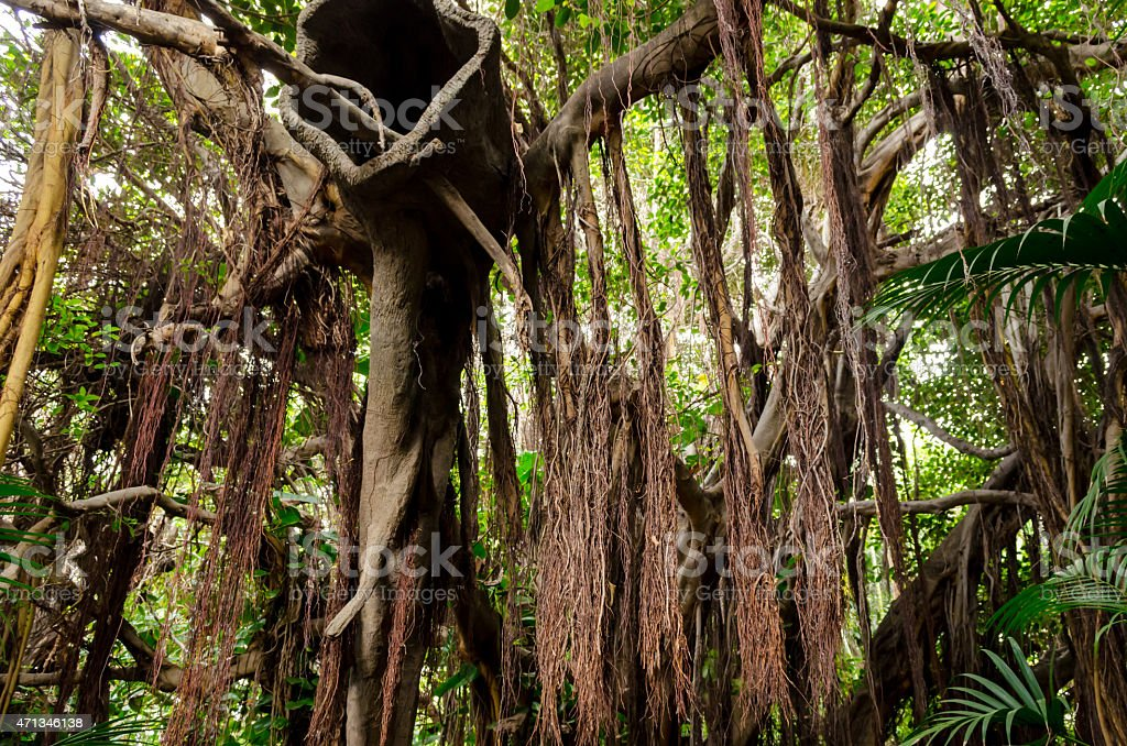 Lianas in Loro Park from Tenerife-Spain stock photo