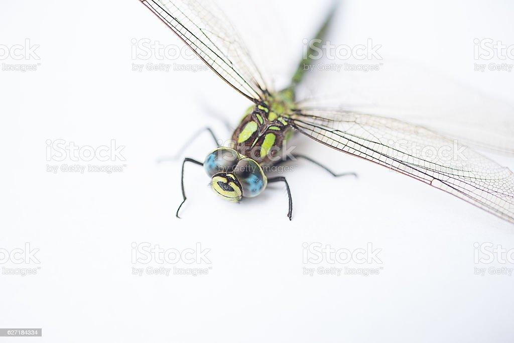 Libelle auf weissem Hintergrund - Nahaufnahme stock photo