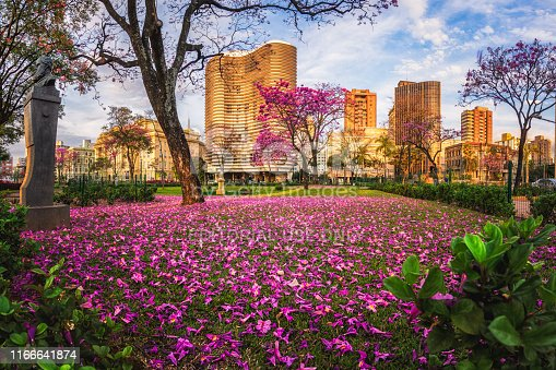 Liberty Square (Praça da Liberdade) in Belo Horizonte. In the Winter, the City is full with beautiful Pink Trumpet Trees. The Famous Niemeyer Building along with other Buildings are lit by a warm orange light from the sunset while the grass is full of pink leaves that fell from the Trumpet Trees.
