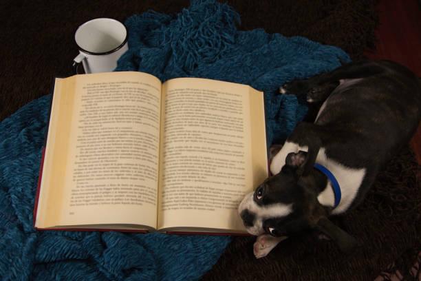 Libro cafe perros Ambiente obscuro con libro cafe y perros libro stock pictures, royalty-free photos & images