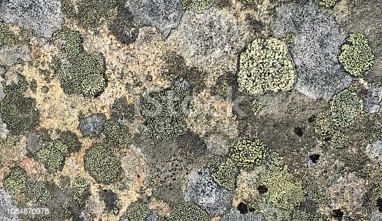 A full frame image of green, gray and black color lichen and moss on a granite rock surface.