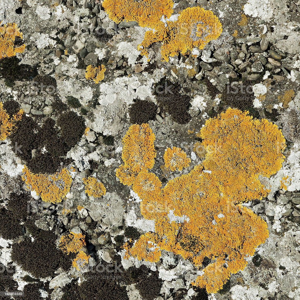 Lichen and moss on stone - square crop royalty-free stock photo