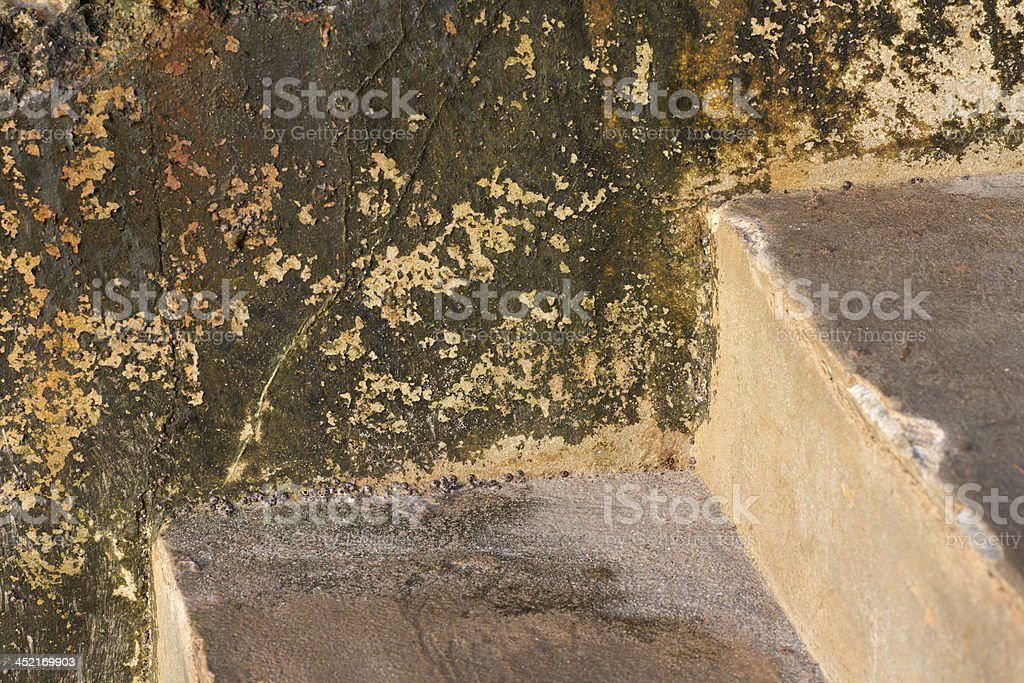 Lichen cement by sea water royalty-free stock photo