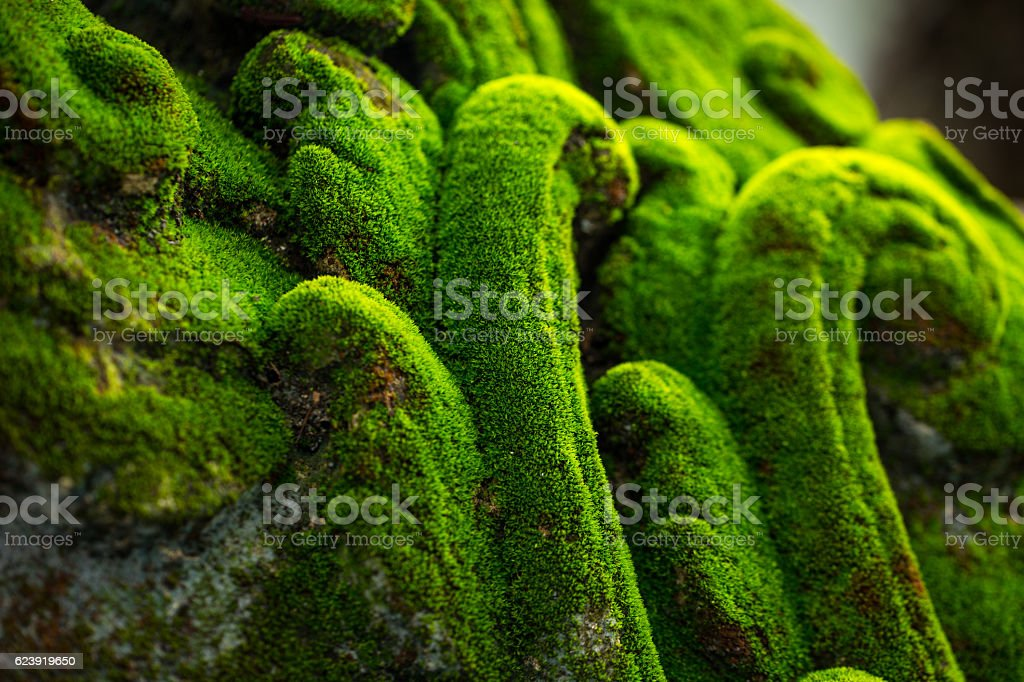 Lichen cover antique architecture in temple stock photo