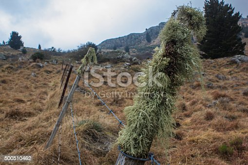 Green Lichen growing on a Hoggsback fence post in the mountains