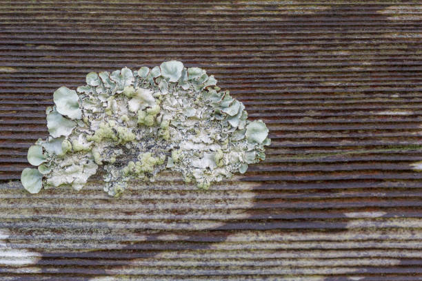 Lichen growing outside on wood stock photo