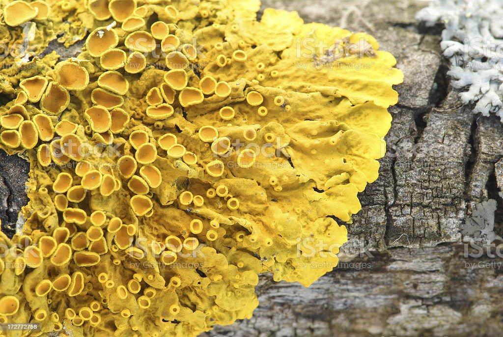 Lichen macro on tree trunk stock photo