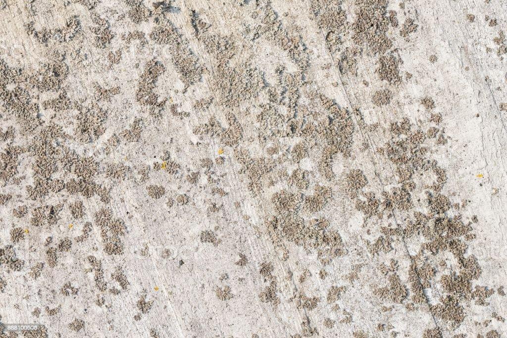 Lichen on a concrete wall stock photo