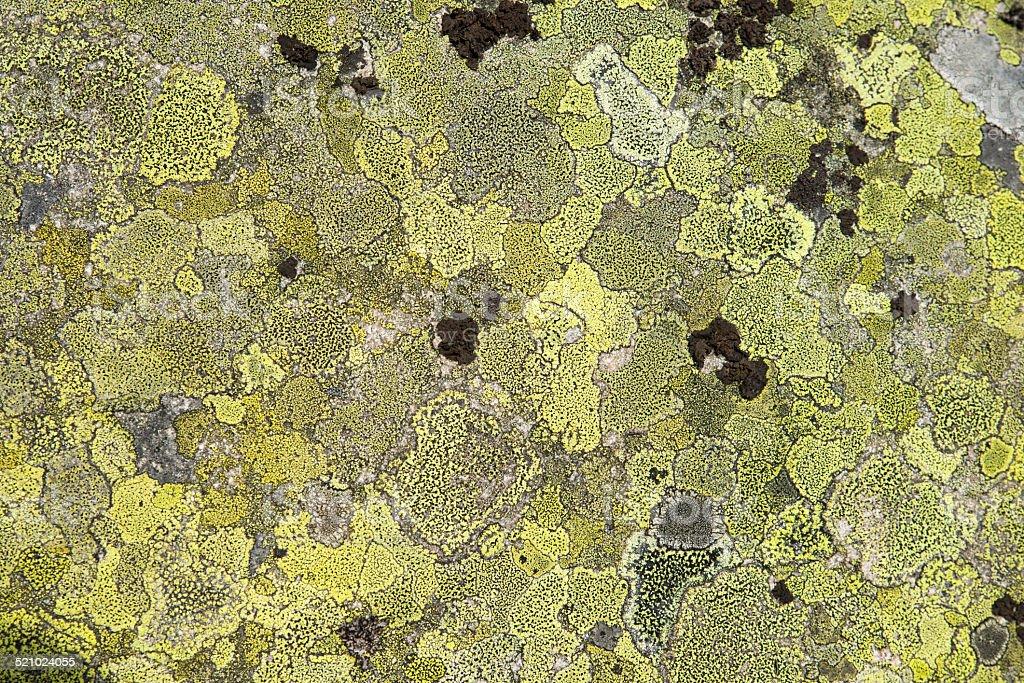 Lichen on a rock stock photo