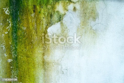 lichen on old cement wall,abstract background closeup