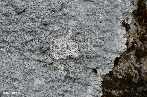 Crustose lichen with glowing center on a boulder in the eastern woods