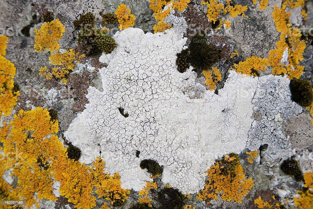 Lichen pattern on the rock. stock photo