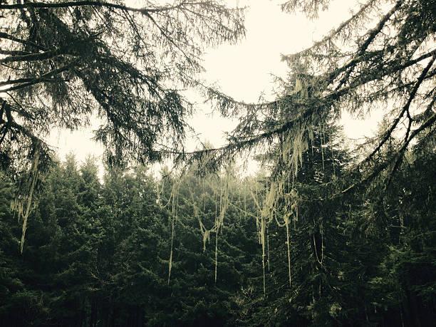 Lichen stock photo