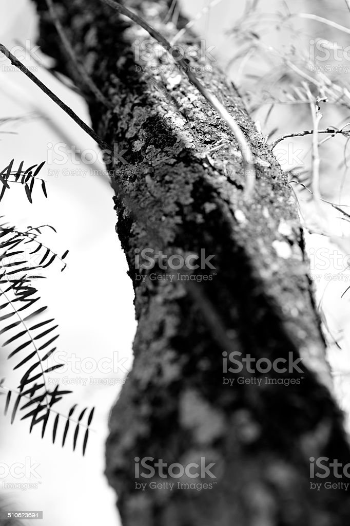Lichens and trees stock photo