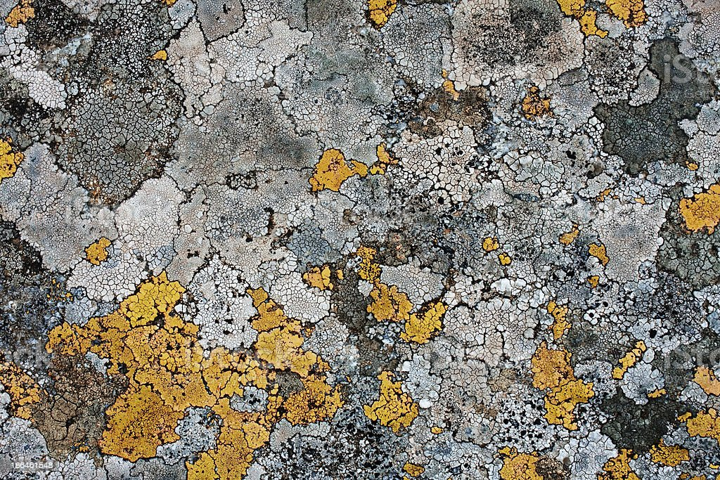 lichens as background stock photo